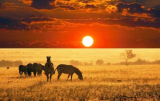 viaggio sudafrica 2018 da milano